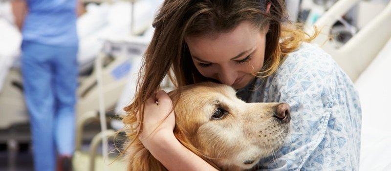 Pet Therapy: quando l'amore di un animale fa bene al cuore