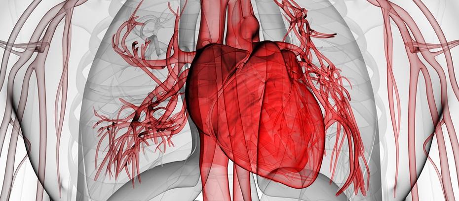 Lo scompenso cardiaco: fattori di rischio, sintomi e cure