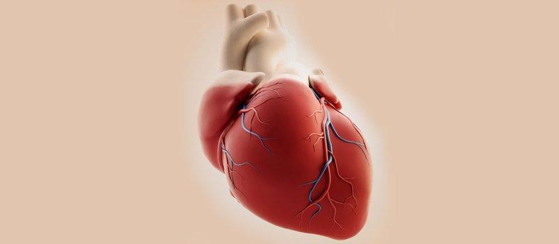 La rivascolarizzazione miocardica