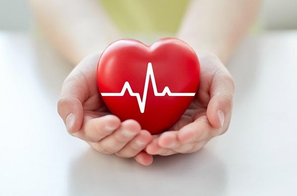 Il cuore visto dall'interno