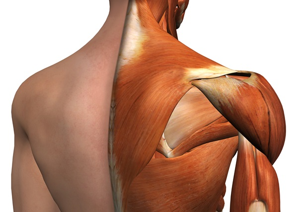 Gravi lesioni della spalla: intervento rivoluzionario in Chirurgia ortopedica